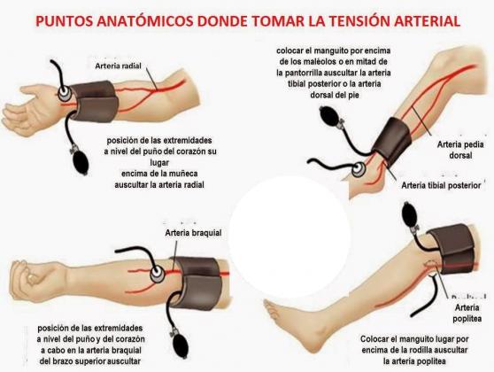 puntos anatómicos para medir la TA