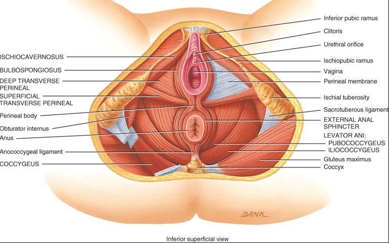 dolor pelvico en el embarazo pdf