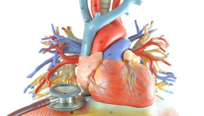 miocarditis causas